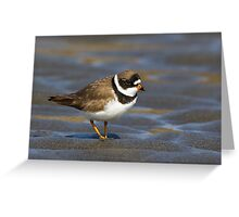 Friendly Plover Greeting Card
