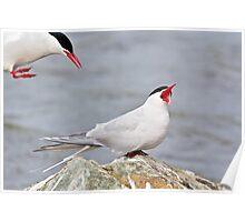 Incoming Alert! - Arctic Terns Poster