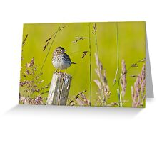 Savannah Sparrow on a Post Greeting Card