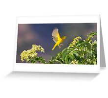 Yellow Warbler Leap Greeting Card