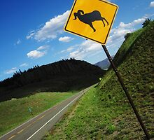 Bighorn Crossing by jackdfletch