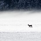 Snow & Fog by Tom Talbott
