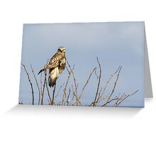 Ever Vigilant -- Rough-legged Hawk Greeting Card
