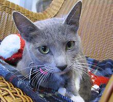 Gray Cat by Margaret Miller