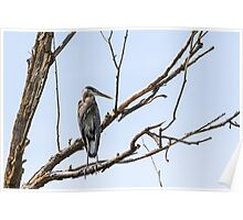 """Dead Tree Sentry"" -- Great Blue Heron Poster"