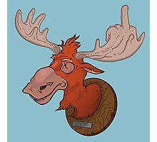 Moose says hello Photographic Print