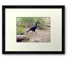 Walk This Way, Photo / Digital Painting Framed Print