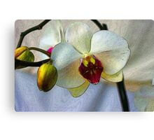 Shining Orchid  Canvas Print