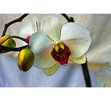 Shining Orchid  Photographic Print