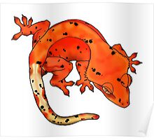 Red Dalmation Crested Gecko Poster