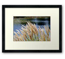 Beautiful plant Framed Print