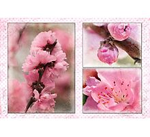 Spring triptych in pink Photographic Print