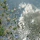 Pond's Edge Reflections  by clizzio