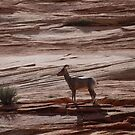 Big Horn Sheep by clizzio