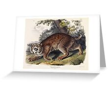 John James Audubon - Lynx rufus  Guldenstaed  Common American Wild Cat  3 4 Natural Size  Male 1842  Greeting Card