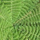 Ponga Fern by Heather Thorsen