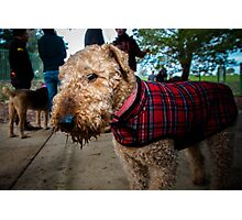 Airedale XX Photographic Print