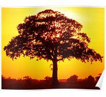 arbre sous la lumiere du soleil Poster