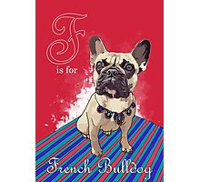 F is for French Bulldog Photographic Print