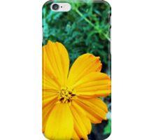 Orange Cosmos iPhone Case/Skin