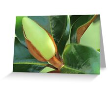 Lustrous Greeting Card