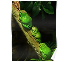 Green tree frogs Poster