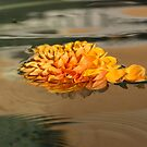 Floating Beauty - Hot Orange Chrysanthemum Blossom in Silky Fountain by Georgia Mizuleva