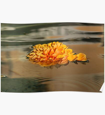 Floating Beauty - Hot Orange Chrysanthemum Blossom in Silky Fountain Poster