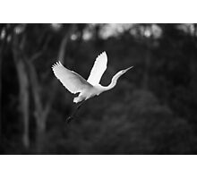 Soaring to the Heavens Photographic Print