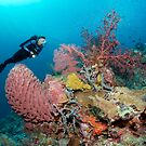 The Perfect Reef by Norbert Probst