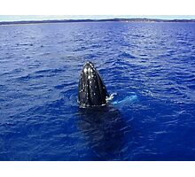 Humpback in Blue Photographic Print