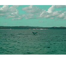 Young Humpback Waving in Turquoise Photographic Print