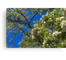 tree in spring Canvas Print