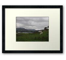 Portree Bay & Wild Horses, Skye, Scotland Framed Print