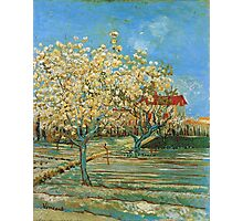 Vincent Van Gogh - Orchard In Blossom, 1888 02 Photographic Print