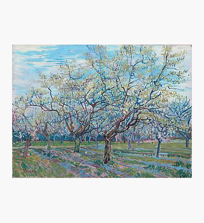 Vincent Van Gogh - Orchard With Blossoming Plum Trees, 1888 Photographic Print
