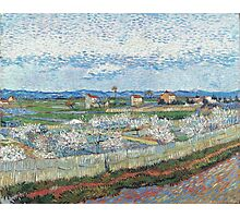 Vincent Van Gogh - Peach Blossom In Le Trebon, 1889 Photographic Print