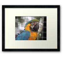 Parrot Peek Framed Print