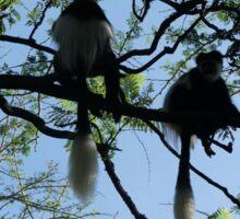Colombus dans les arbres Sticker