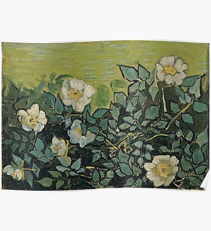 Vincent Van Gogh - Wild Roses, April 1890 - May 1890  Poster