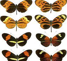 butterflies by nicholasdamen