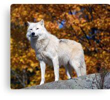 Loup Arctique Canvas Print