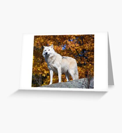 Loup Arctique Greeting Card
