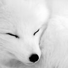 asleep by Alain Turgeon