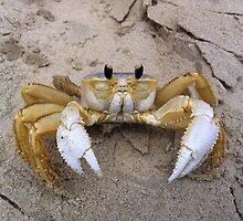 Crabby by Kreardon