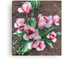 Pretty Spring Tulips Canvas Print