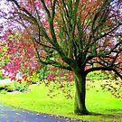 An Autumn Tree by Fara