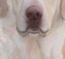 White Labrador Retriever  Sticker