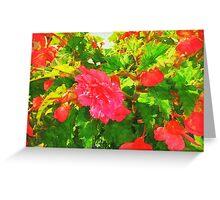 Red Begonia Greeting Card
