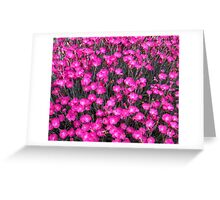 Field of Pinks Greeting Card